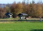 Liebhaverejendom-hesteejendom-jagtejendom-strandgrund-jylland59