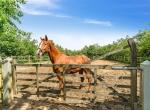 hesteejendom-liebhaverejendom-jylland24