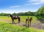 hesteejendom-liebhaverejendom-jylland26